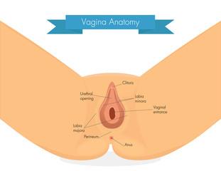 Vagina Vulva Scheide Bilder