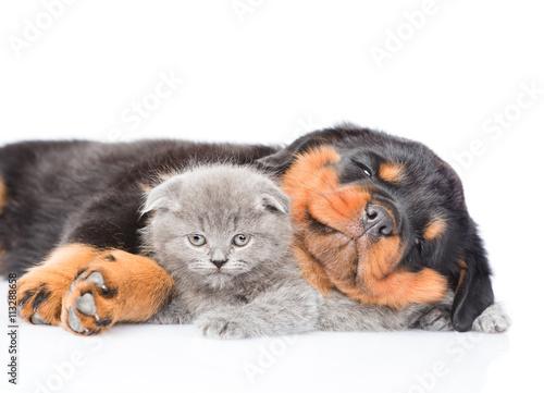Собачка с играющимся котом загрузить
