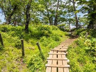 西丹沢の木道