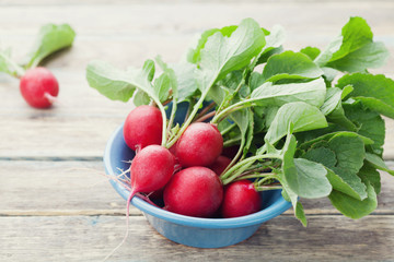 Red radish in blue bowl on rustic wooden table, organic food, garden vegetables