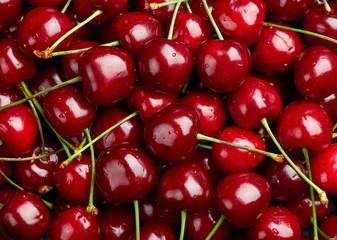Fotorollo Kirschblüte Cherry Background. Sweet organic cherries