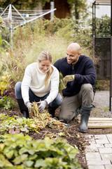 Mature couple gardening at yard