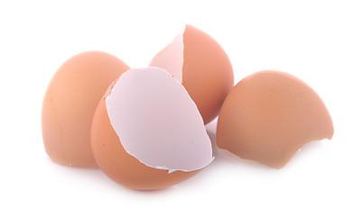 Eggs shell