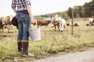 Low section of female farmer with bucket standing at field with animals grazing in background