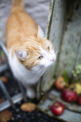 Selective focus of cat