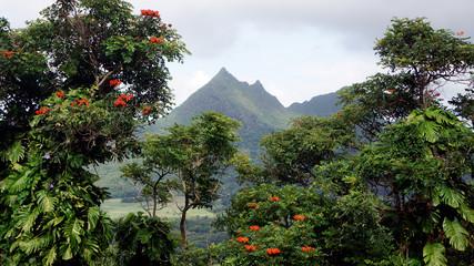 Hawaiian Trees and Mountain Peak