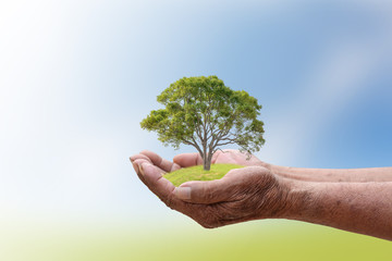 We love the world of ideas, man planted a tree in the hands.Background blur  sky