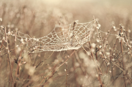 Selective focus of spider web on dead plants
