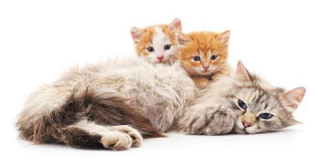 Two kittens with a cat.