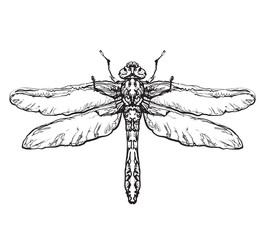 Dragonfly. Black insect sketch
