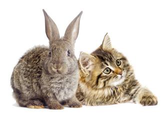 tabby kitten and rabbit looking