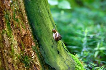 Snail on a stump