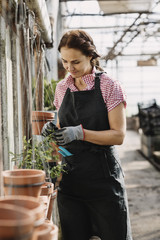 Female gardener wearing apron and checking potted plants in greenhouse