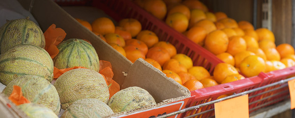 Fresh rockmelons or cantaloup and oranges