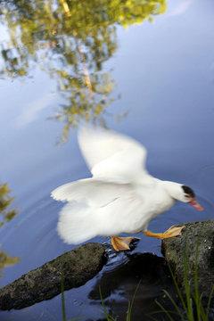 Bird jumping on rocks