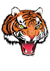 Tiger head angry