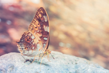 Butterfly in nature with vintage filter