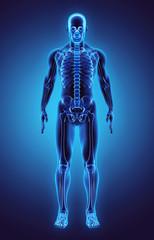 3D illustration Part of Human Skeleton, medical concept.