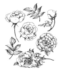 A set of sketches blooming branch of wild rose. Element for your design. Vector Illustration