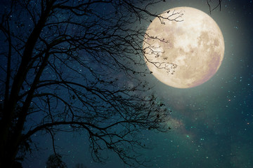 Milky Way star in night skies, full moon and old tree - Retro style artwork with vintage color tone (Elements of this moon image furnished by NASA) Fotoväggar
