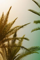 Palm trees against sky. summer, vacation and tropical concept