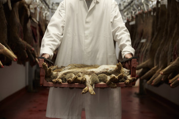 Close Up Of Butcher In Cold Store Holding Tray Of Rabbits