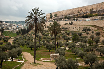 Olive garden near the walls of Old City in Jerusalem, Israel