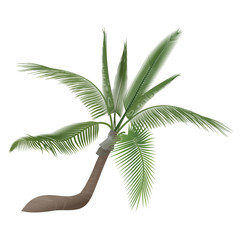 Vector coco nut tropical exotic high detailed palm tree isolated.