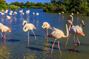 Flock of adorable flamingos