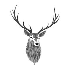 Gray deer