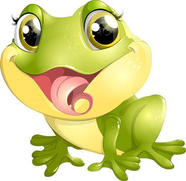 beautiful frog with big eyes