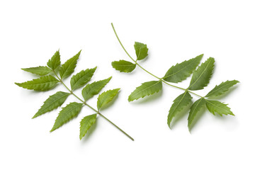 Neem twigs and leaves