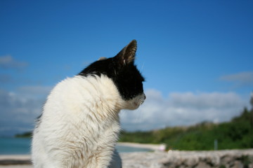 Cat and the sea