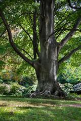 大木の幹 / Big tree
