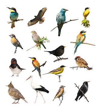 Set of photographs of birds isolated on white background, texture
