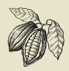 black cacao beans