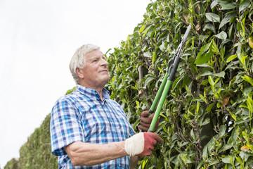 senior cut hedge garden