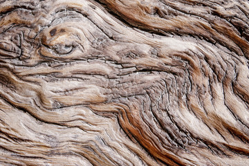 wood texture, beach dead wood texture showing cracked pattern