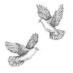 Hand Drawn Sketch of Flying Doves