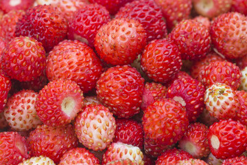 Forest berry - strawberries