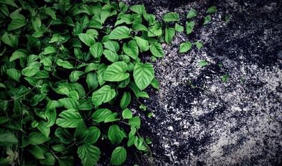 Plant climbing up rock
