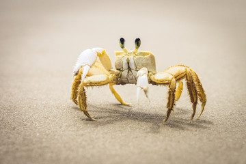 A crab walking on a wet sandy beach