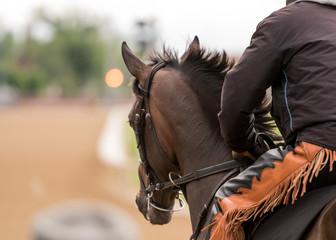 Brown Horse with Orange Jockey Pants