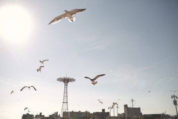 Birds flying against sky in Coney Island on sunny day