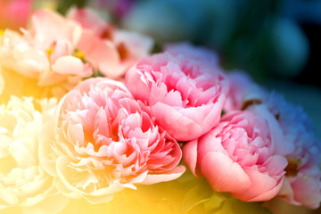 Photo beautiful peonies