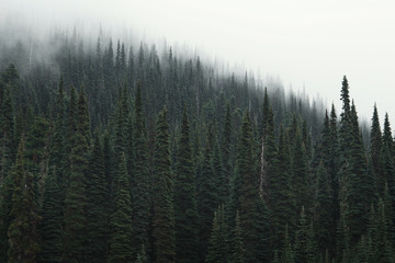 Scenic view of trees growing in forest during foggy weather
