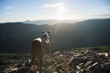 Rear view of dog standing on field against mountains
