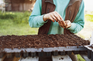 Midsection of woman planting seeds at farm