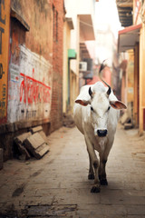 Cow walking on footpath amidst houses
