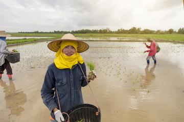 Beautiful farmer women smiling holding seedling in rice field